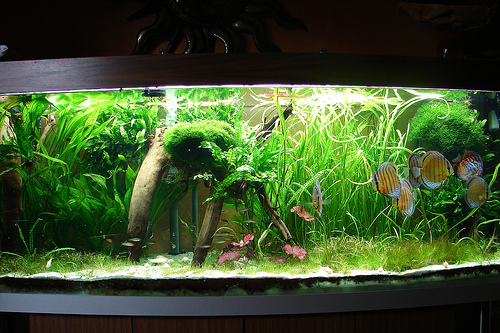 Tank Photo by Lux Tom on Flickr