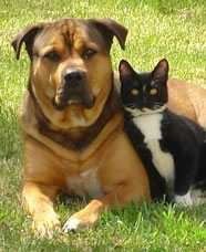 Who said cats & dogs are not friends?