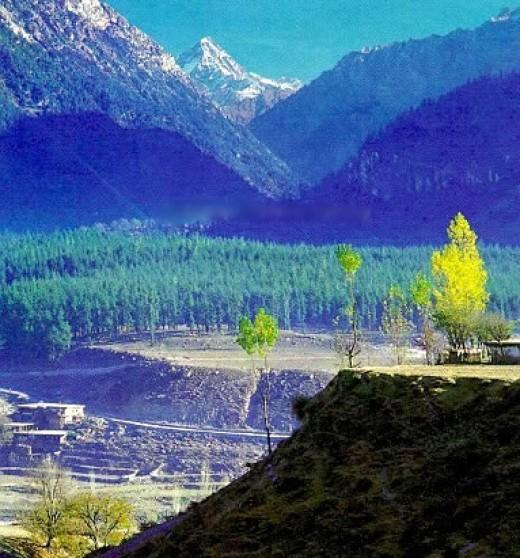 Kalam Usnu Forest