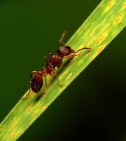 Get rid of ants before they get into your home.