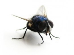 Flies can quickly overrun your home in the summer.