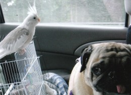 bio daughters dog and bird