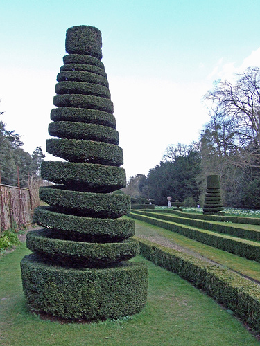 Spiral topiary, cone shape.