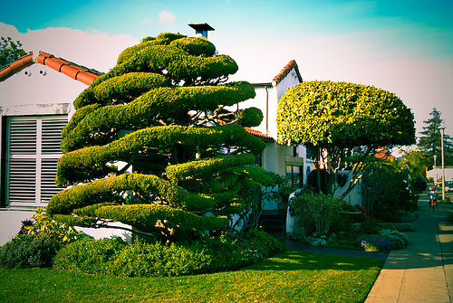"Natural topiary, highlights the natural shapes of the tree while giving it a ""design"" look."