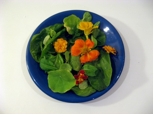 A salad of spinach, mesclun, nasturtiums and marigolds / Photo by E. A. Wright
