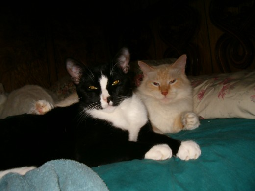 Our cat Blacky and Boo. GBY