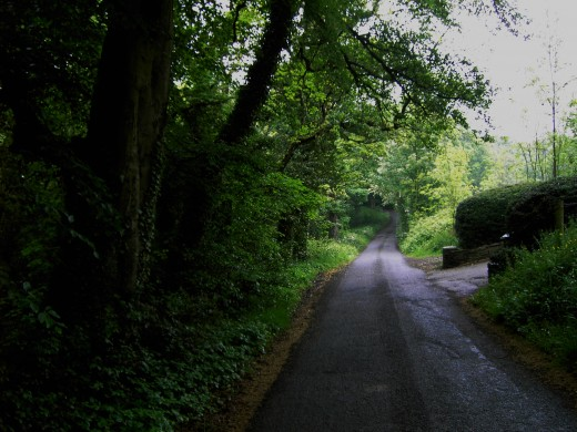 Leafy lanes are a joy to explore.Photograph by D.A.L.