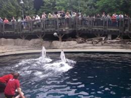 Dolphins entertain visitors to the Aquarium