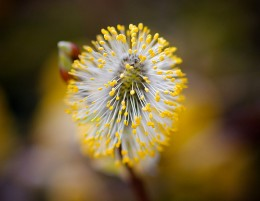 May flowers often means seasonal allergies to many. photo: monkeyleader @flickr