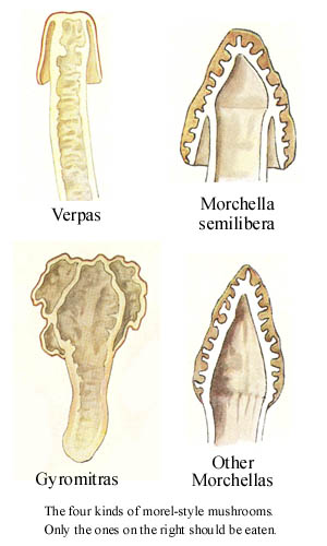 These are examples of FALSE morels