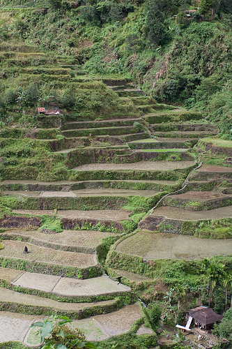 Planting Season in the Banaue Rice Terraces (Photo courtesy by kin0be from Flickr.com)