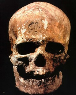 Human Origins - The Study of Human Fossils and Other Methods