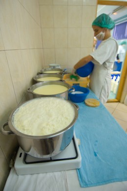Milk being heated for making cheese.  Photo by Snyderdf at Dreamstime.com.