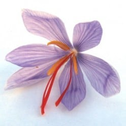 Saffron: The Most Expensive Spice in the World
