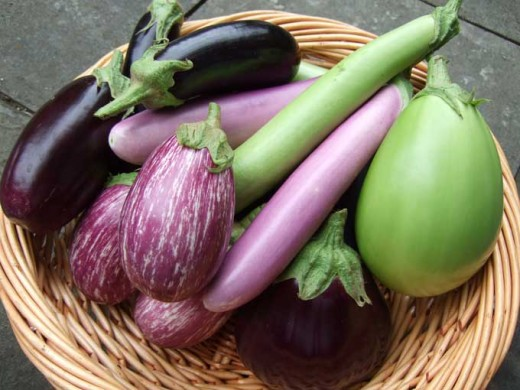 DIFFERENT KINDS OF EGGPLANT (Photo Courtesy of http://greenarbytheday.files.wordpress.com/)