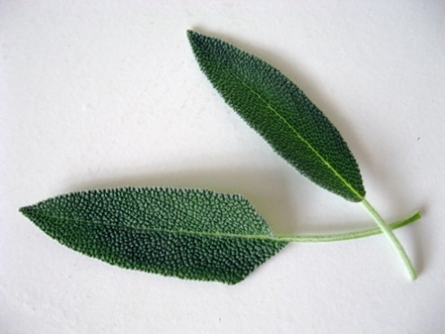 Sage leaves / Photo by E. A. Wright