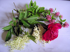 Paeony, Elderflower and clover