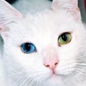 thepetmedium profile image