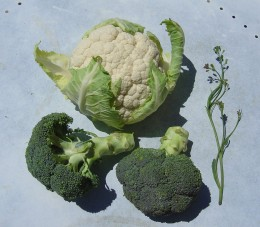 Broccoli, Cauliflower and a stalk from my self-seeded member of the brassica family.