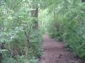 Sensory outdoor walks to help kids appreciate nature