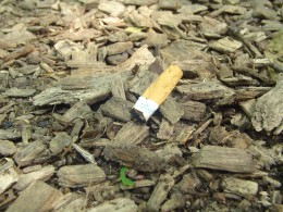 A cigarette butt is out of place in a no-smoking park. Help your kids play detective and spot things like this. A cigarette filter would take over 12 years to decompose in the wild.