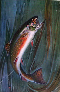 Trout Fishing - For Both Sport and Food