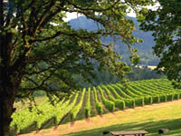 Enjoy a memorable picnic lunch in the beautiful vineyard setting.