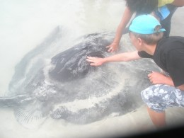 We pat a wildlife manta ray even if it can endanger her life...because we can