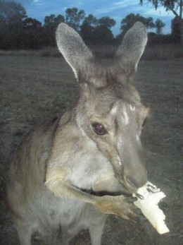 We feed a wildlife kangaroo even if it means it gets used to it and will not be able to feed itself...because we can