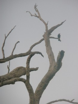 Then we see a bird on a dry tree and wonder why he is there not realising that...
