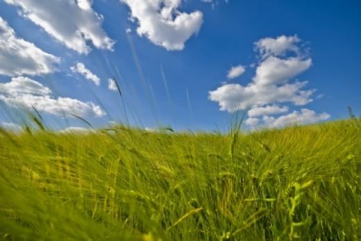Photo by Dan http://www.freedigitalphotos.net