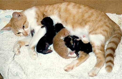 Angie and her kittens