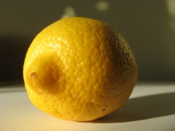 Conventional lemons only have this deep yellow color in afternoon light / Photo by E. A. Wright