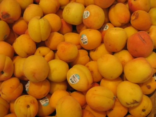 Only the orange apricot on the right looks at all ripe / Photo by E. A. Wright