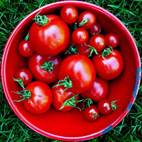 Different types of tomatoes photo: jacki-dee @flickr