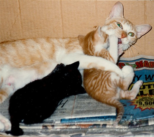 Angie and 2 of her kittens