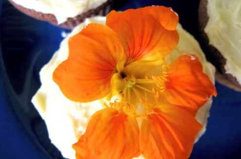 Nasturtium flowers work well as a decorative topping for baked goods like this cupcake / Photo by E. A. Wright