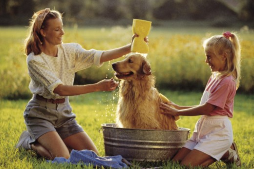 Grooming and bathing your dog yourself can create a stronger bond with your pet (and your family!)