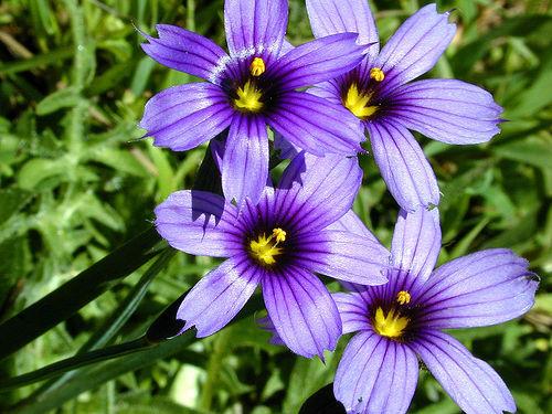 Source: www.flickr.com/photos/candiedwomanire/11925311.jpg