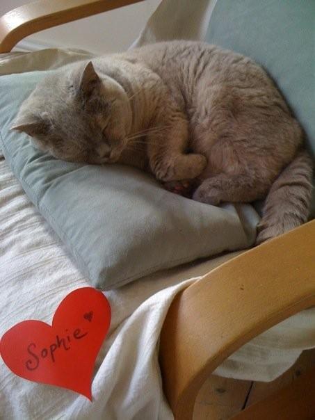 Sophie, her cat