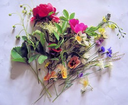 Many flowers are edible. These are just some that were blooming at Les Trois Chenes, Videix,Limousin, France in our May garden.