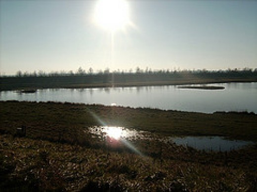 Freiston Shore - one of the marsh lands