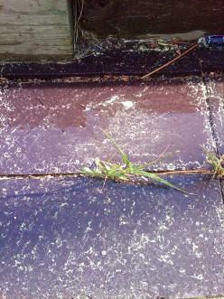 Treegasmic!  Health benefits of inhaling Ponderosa Pine tree pollen