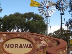 Come to Morawa WA when the wildflower season is here.