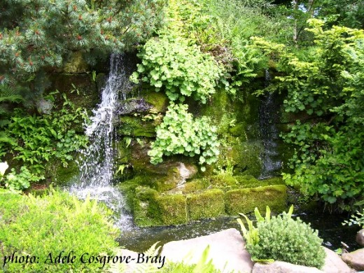 A beautiful waterfall and pond, surrounded by moisture-loving plants.