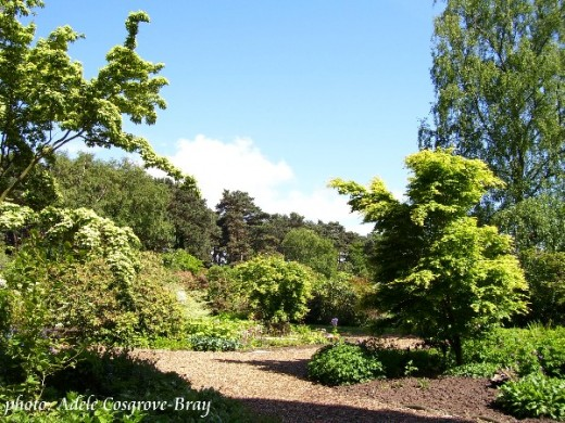 A winding path leads along steep terraced gardens and into the woodland area.