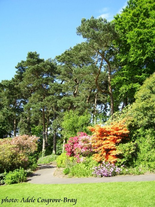 Ness Gardens is renowned for its colourful azaleas.