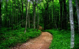 Trail near the Pictured Rocks