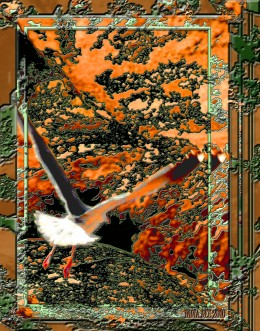 'THE TAKE OFF GULL'  a snapshot becomes a work of unique art by using image software, Photoshop basic skills