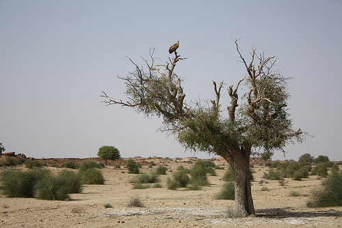 Some vegetation in the region